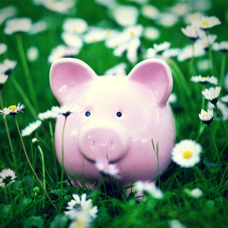 Piggy Bank in the grass
